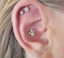 Christina Colour Piercing Carbon Ink Tattoo 070 conch helix-02